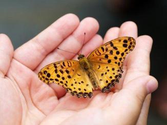 Un Collectionneur de Papillons devant le tribunal correctionnel de Tarbes