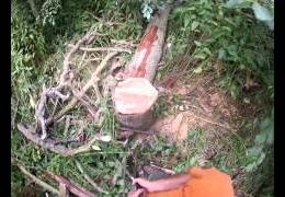 Tree work 2012