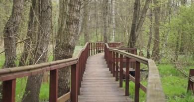 Wymiana mostka w lasku Bródnowskim