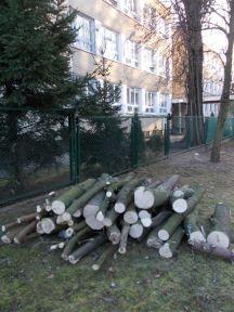 drzewa brodno1