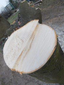 drzewa brodno2