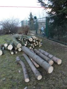 drzewa brodno3