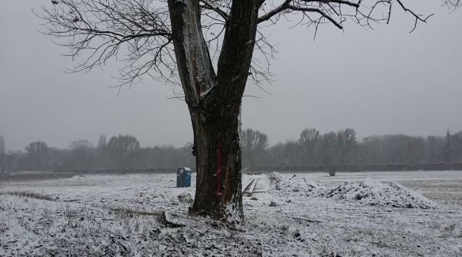 Drzewo na polu PGR czeka na wycięcie / fot. targowek.info
