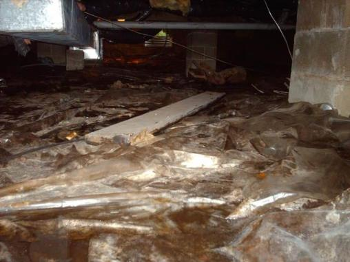 unhealthy crawl space is a breeding ground for mold, mildew, insects and more