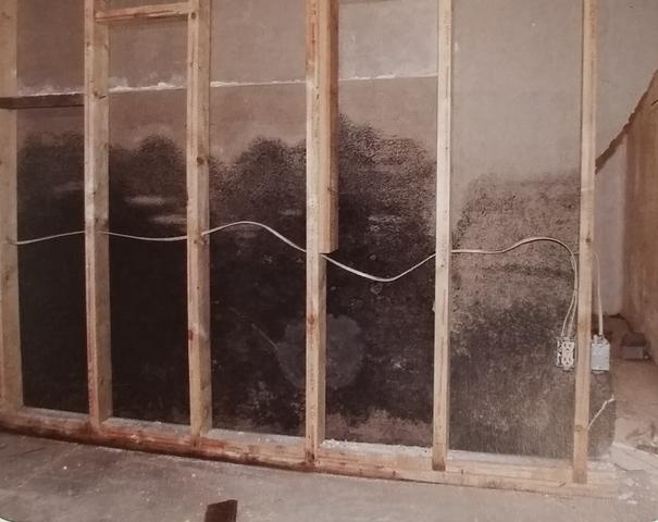 mold growing in the walls of a basement caused by moisture
