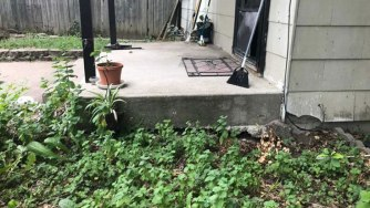 foundation problems from plants and roots