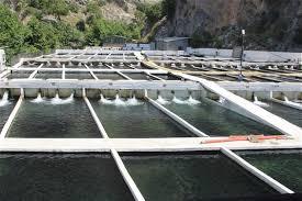 Su ürünleri hibe desteği