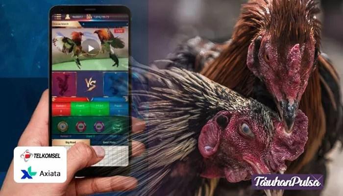 Persiapan Berjudi Sabung Ayam Online Untuk Awam