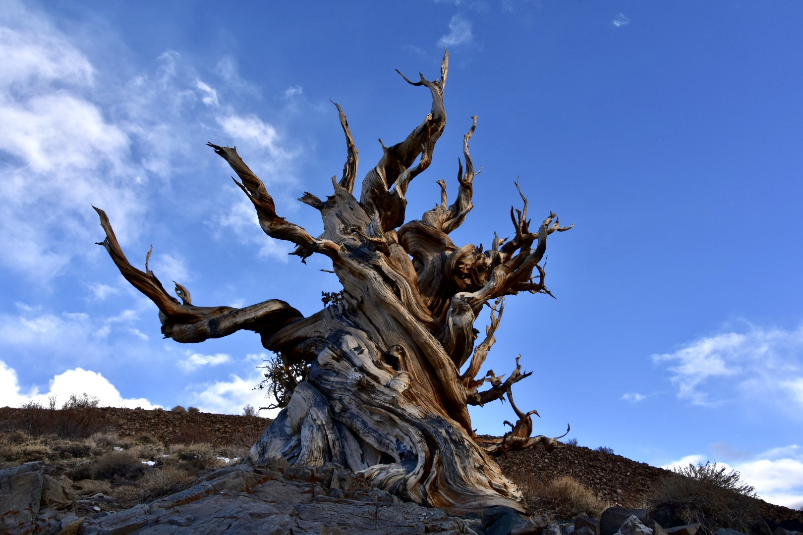 Road: Petroglyphs, Volcanic Tablelands and Ancient Bristlecone Pines