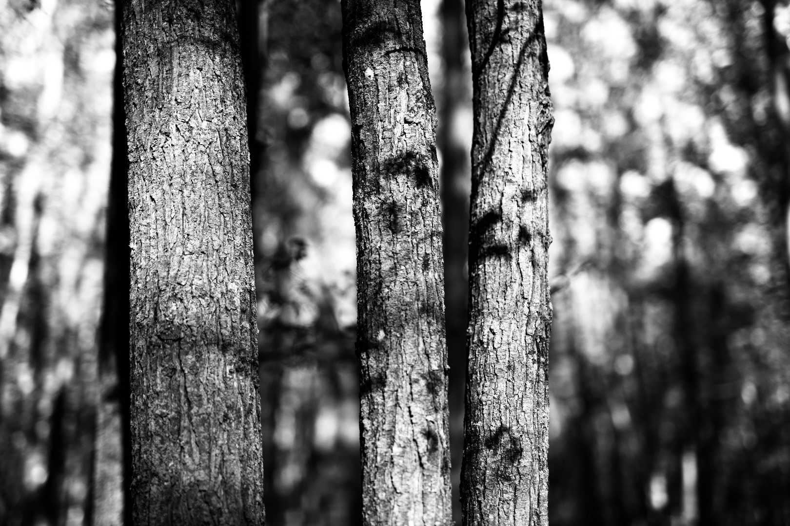 Photography by Taryn Okesson