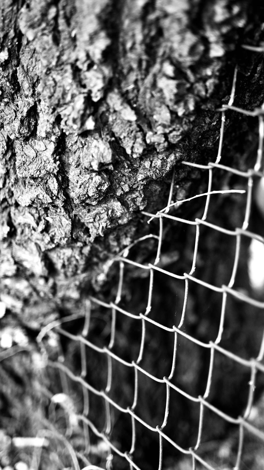 Tree Eats Chainlink Fence by Taryn Okesson