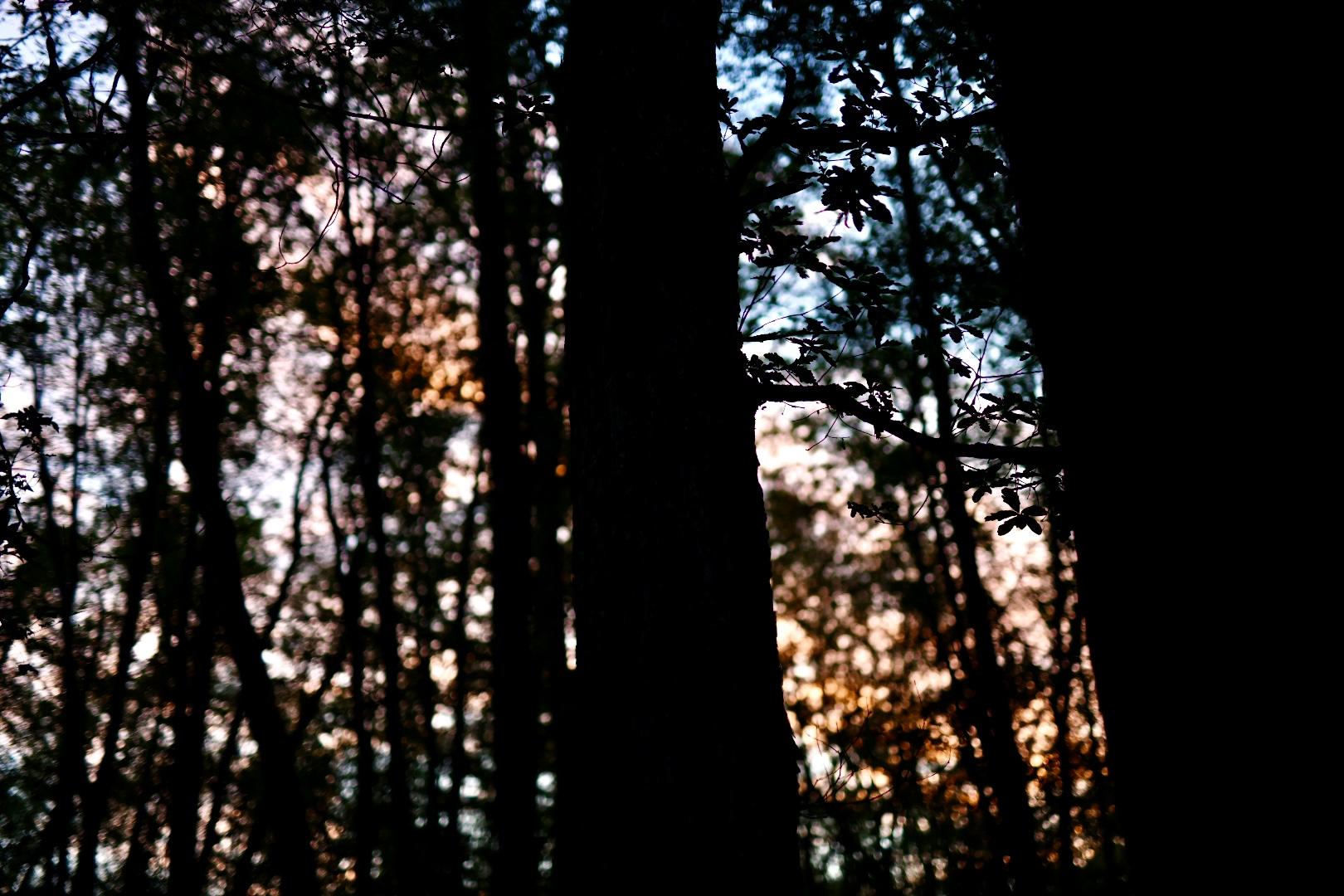 Michigan Sunrise By Taryn Okesson