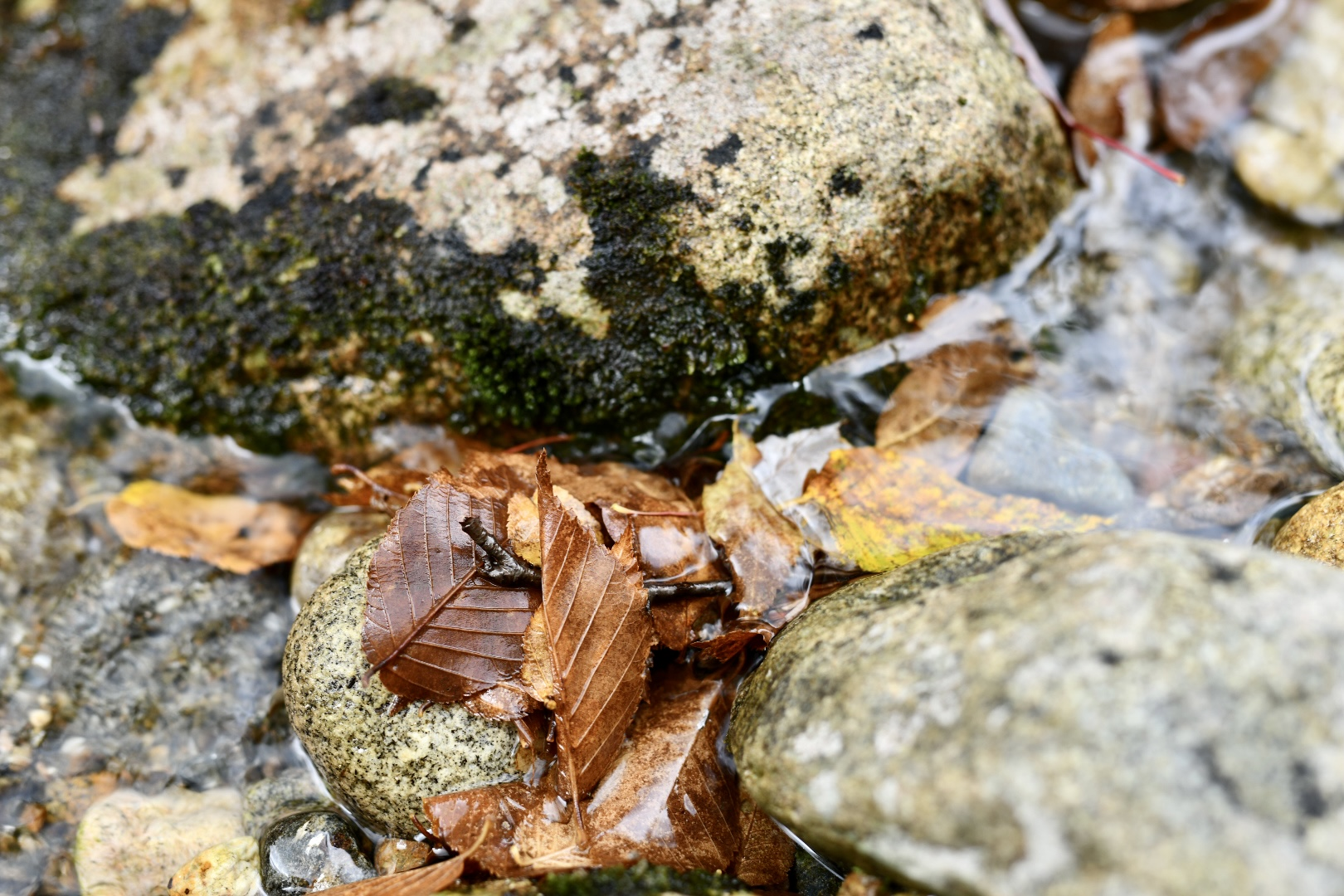 River rocks and autumn leaves. 2021. Taryn Okesson. Digital Photography. White Mountain National Forest, New Hampshire.