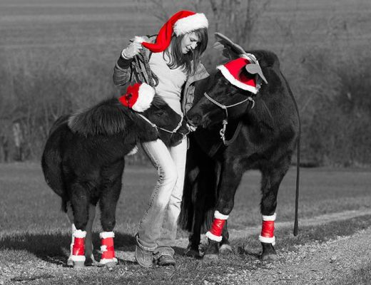 Geschenke für dein Pferd