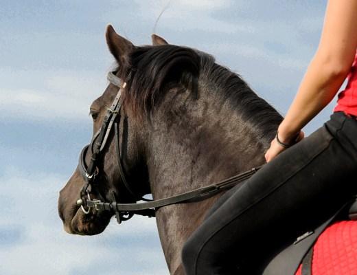 Achtsamkeit, Das Tao der Pferde