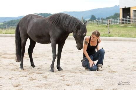 Voraussetzungen für das Vertrauen des Pferdes