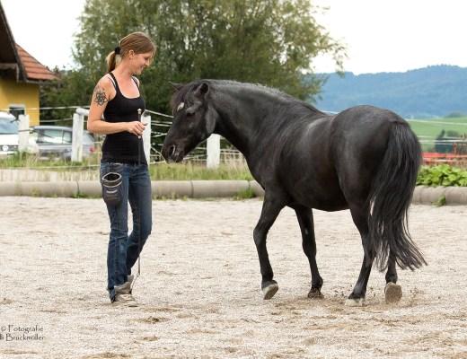 Intuition mit Pferden nutzen
