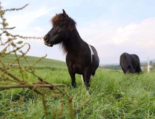 konsequentes Pferdetraining