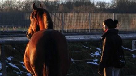 Freiarbeit mit Pferden - Blicke schweifen lassen