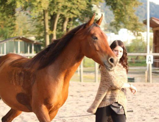 Freiarbeit mit Pferden