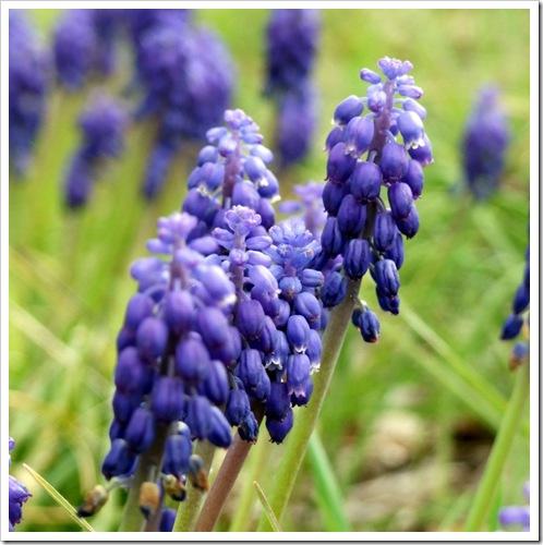 Purple Flower Drops_01