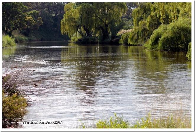 Day 48 - McDonald River