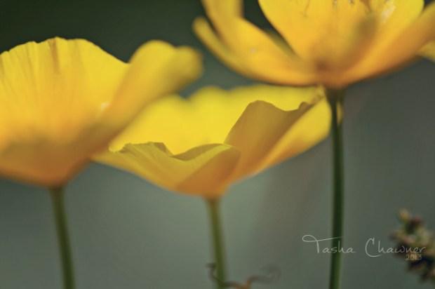 yellow-flowers
