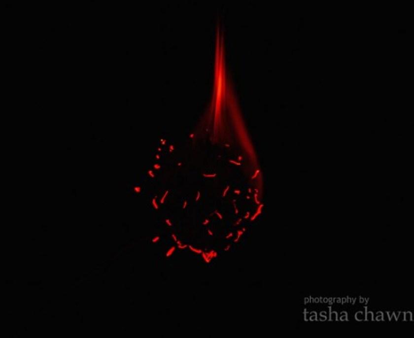 DandelionFire.2
