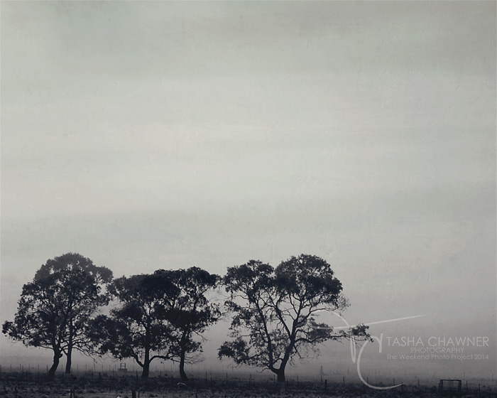 black and white photo of trees in the mist