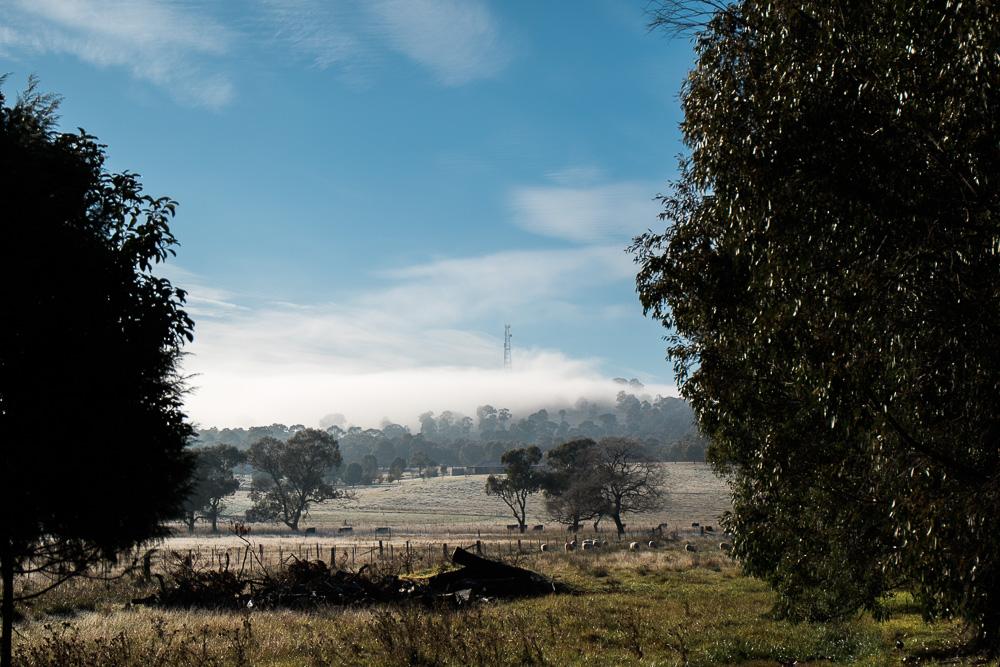 framing an image using trees