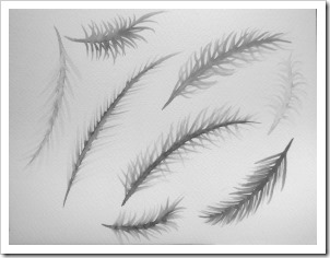 Feathers_greyscale
