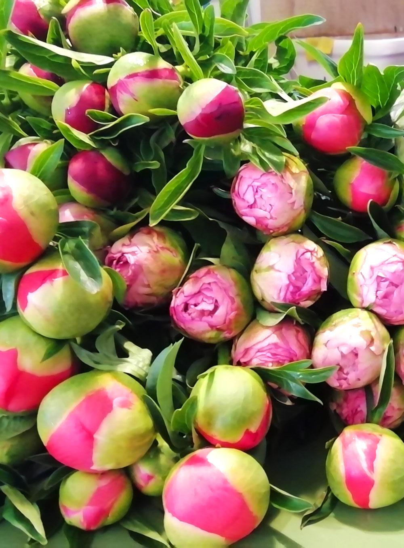 Tasini Fiorista - shop - bouquet peonie