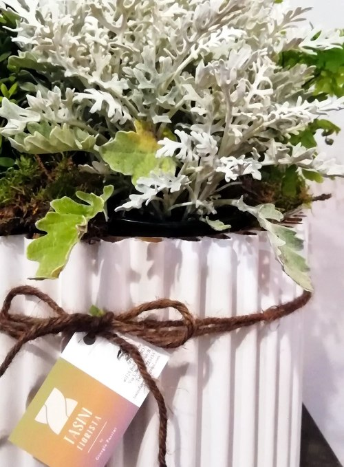 Tasini Fiorista - shop - flowerbox pianta