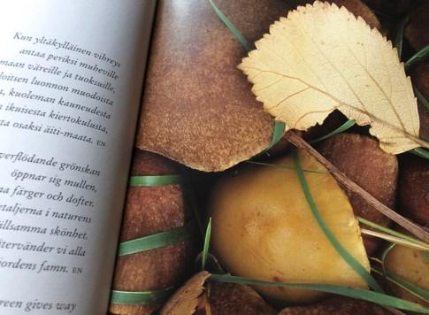 Yksityiskohta: syksyn sieniä ja lehtiä