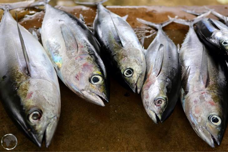 Tuna for sale art a Fish market on Tobago.