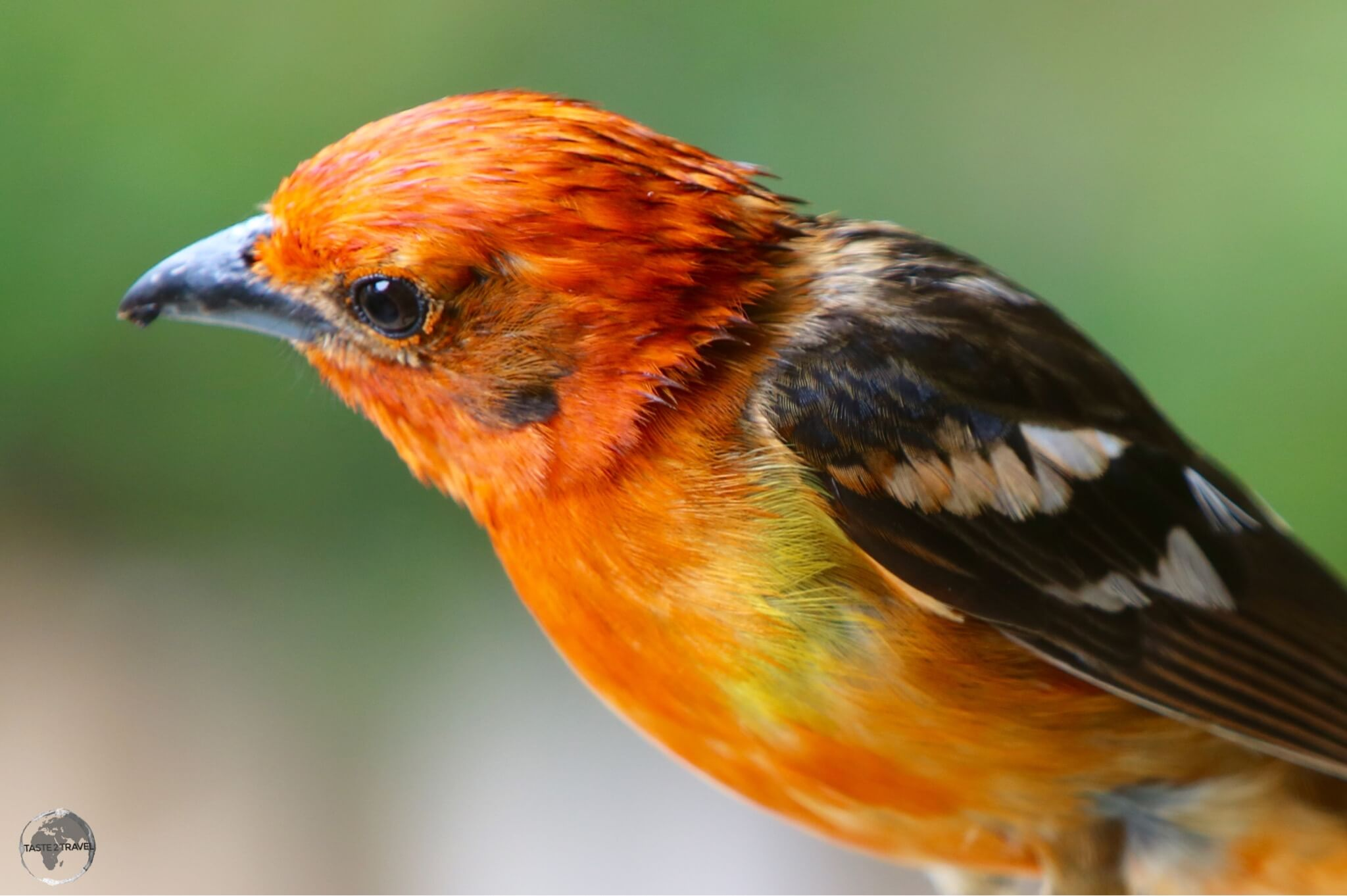 The Gambling bird at Finca Lerida.