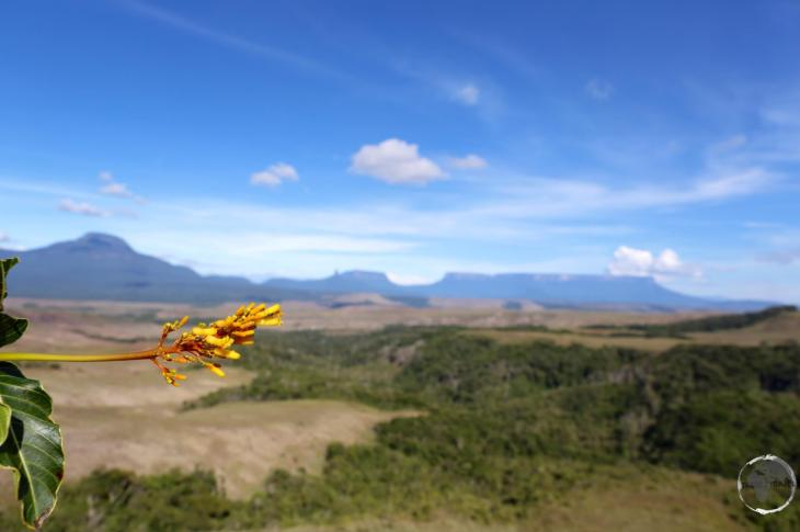 Gran Sabana Region (Venezuela) Travel Report: View of the countryside in Canaima National Park