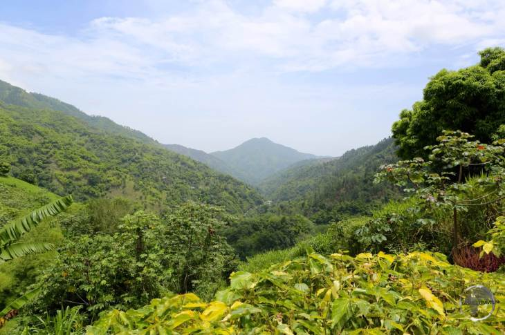 Blue Mountains, home to Jamaica's famous coffee farms