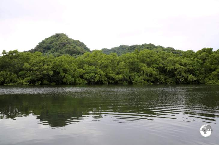 The tranquil view of the mangrove from the deck of Bully's restaurant.