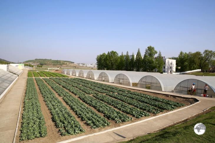 Vegetable gardens at the <i>Chongsan-ri Cooperative Farm</i>.
