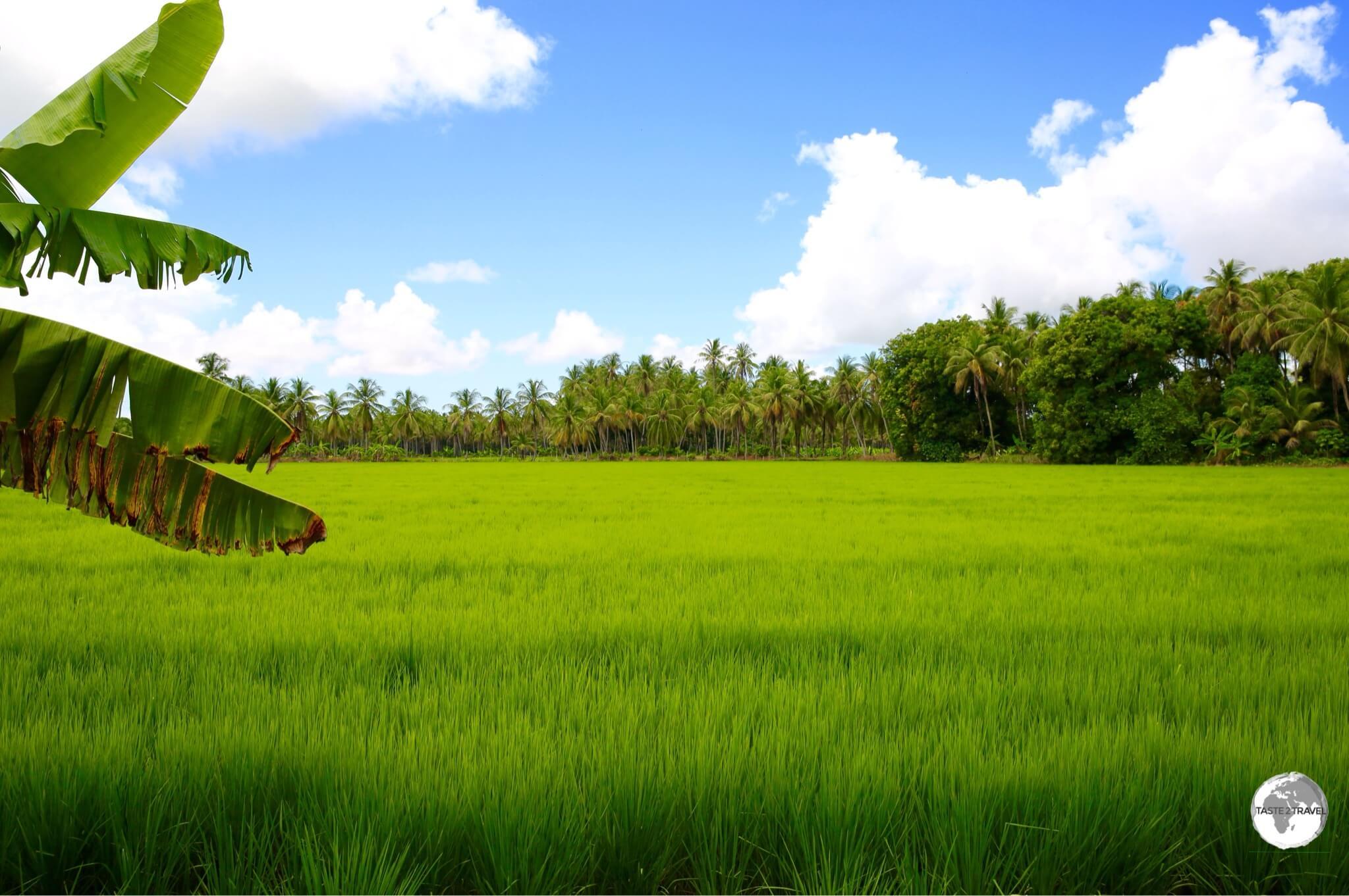 Rice farming is the main occupation on Wakenaam Island.
