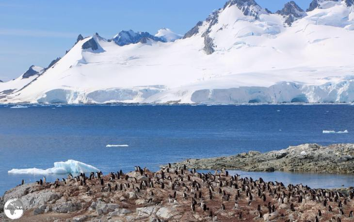 Danco Island is home to a large Gentoo penguin breeding colony and offers panoramic vistas of the Errera Channel.