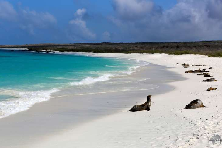 The most beautiful stretch of sand in the Galápagos - Gardener Bay, Española Island