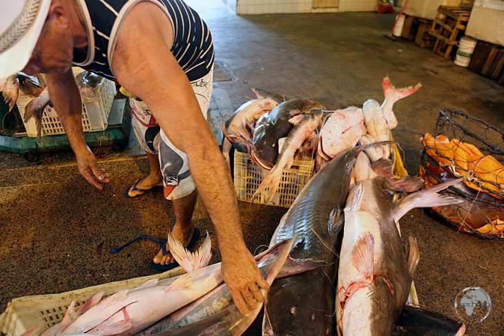 The Mercado Modelo in Santarém is a great place to view the giant species of fish which inhabit the depths of the Amazon river.