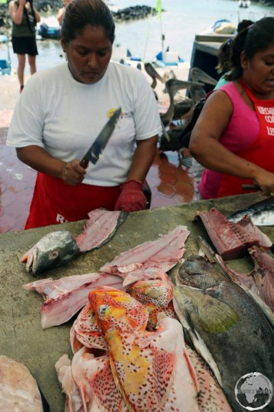 The bustling fish market at Puerto Ayora on Santa Cruz Island, one of the few Galapagos Islands which is populated.