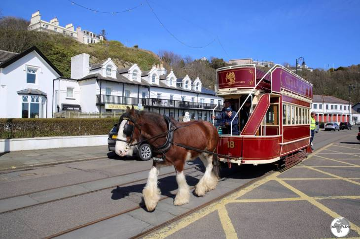 The historic Douglas Bay Horse Tramway is a great way to take in the sights of the Capital's waterfront.