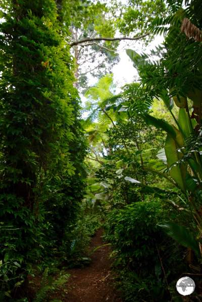 Lush vegetation lines the path which leads to Grotte de la Reine Hortense on the Isle of Pines.