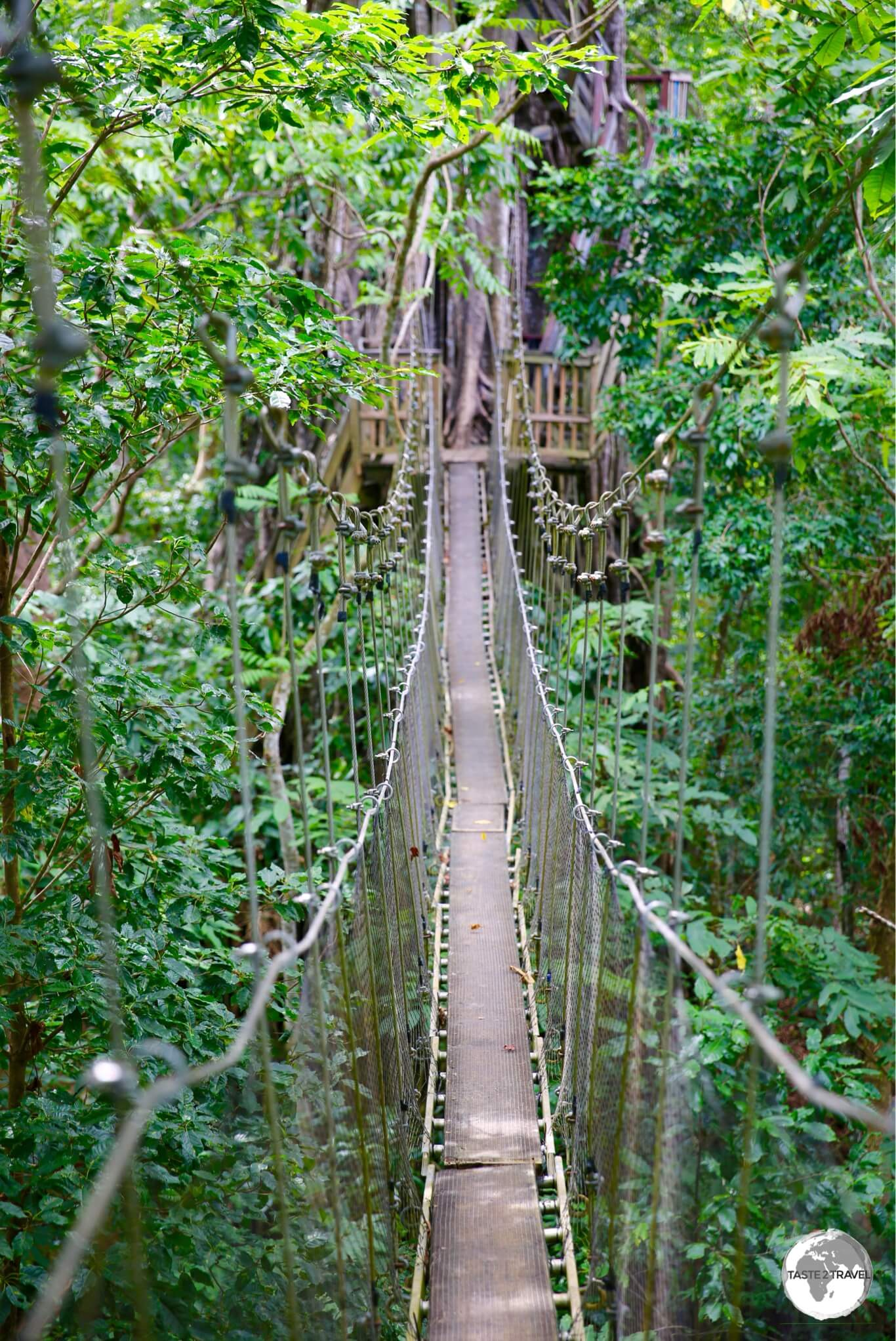 Suspended 40 metres above the rainforest floor, the shaky Canopy Walkway is unique in Samoa and can be challenging for those with a fear of heights.