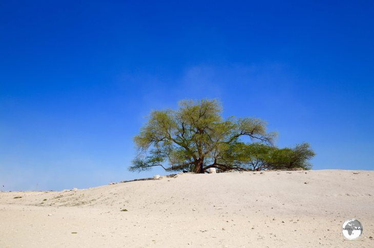 A lone green desert dweller, the Tree of Life.
