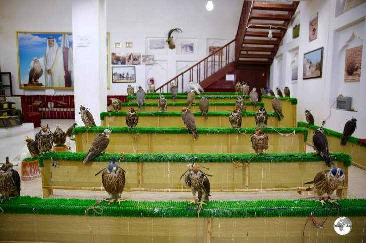 Falcons for sale in one of the many shops which can be found in the Falcon Souk.
